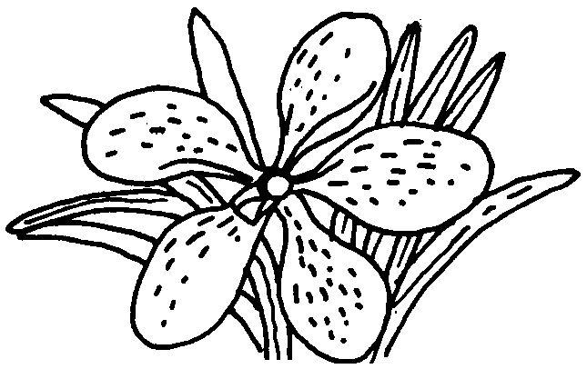 download clip art bunga - photo #36