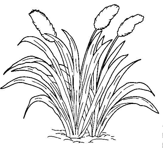 7700 Gambar Hitam Putih Rumput Gratis Terbaik