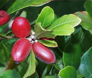 Fruit Picture - mahir.tik.com